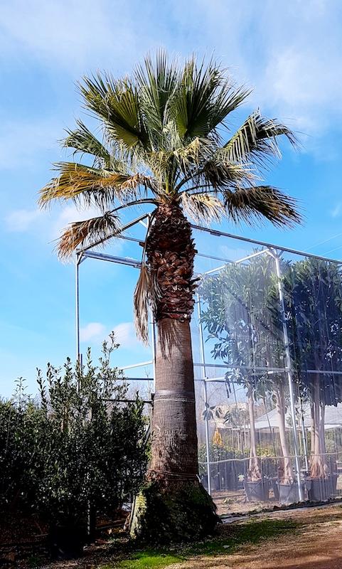 www.Palmenservice-Mallorca.com
