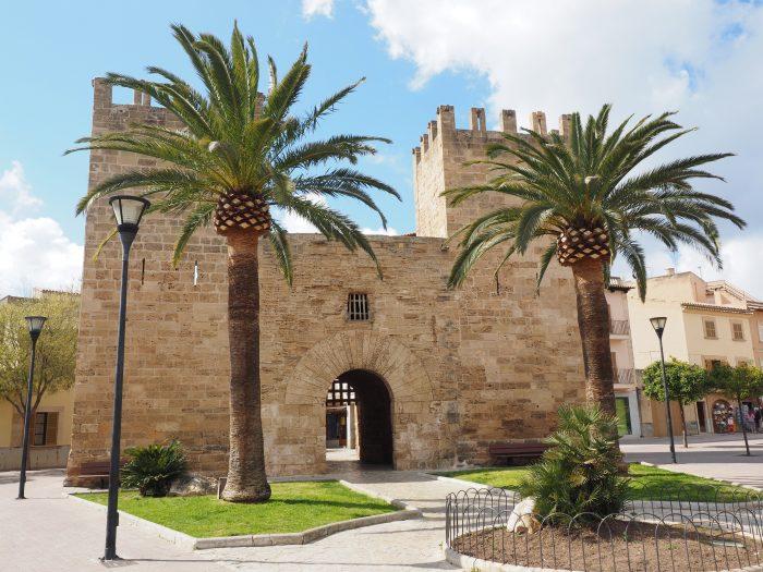 Palmen auf Mallorca kaufen von Palmenservice-Mallorca.com